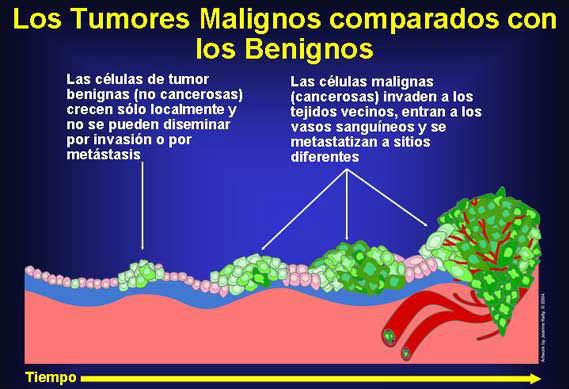 Papiloma tumor benigno, Medicamente pentru tratamentul papiloame